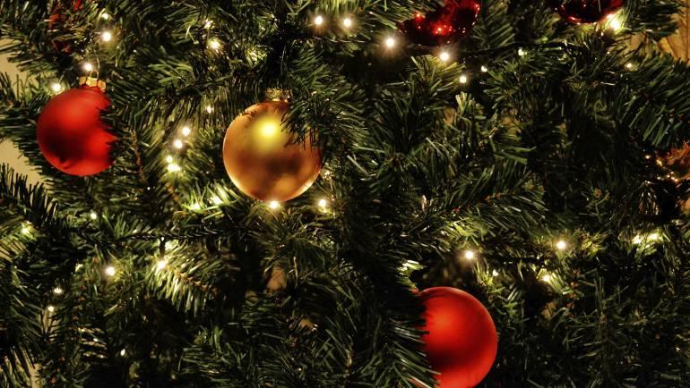 Plagas en tu árbol navideño